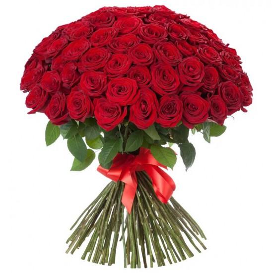 101 Big Head Holland Roses