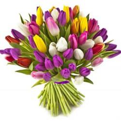 29 Tulips Mix
