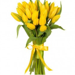 25 Yellow Tulips