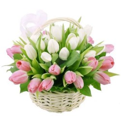 39 White and Pink Tulips in the Basket