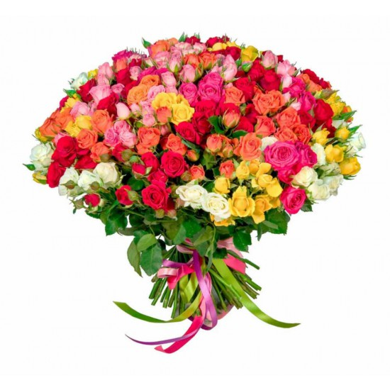 51 Mixed Coloured Spray Roses