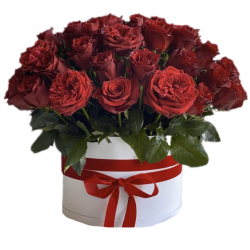 51Red Roses in the box