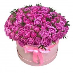 101 Spray Roses